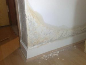 Reading Rising Damp Treatments
