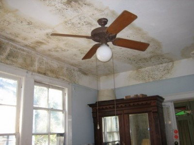 Mould Treatment in Bournemouth